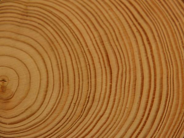 wood annual rings tree 1 1 - Деревянные окна из лиственницы